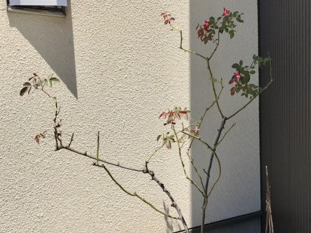 葉が復活したカクテル