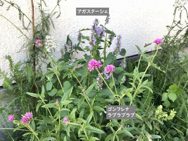 f:id:toniho:20210721112411j:plain