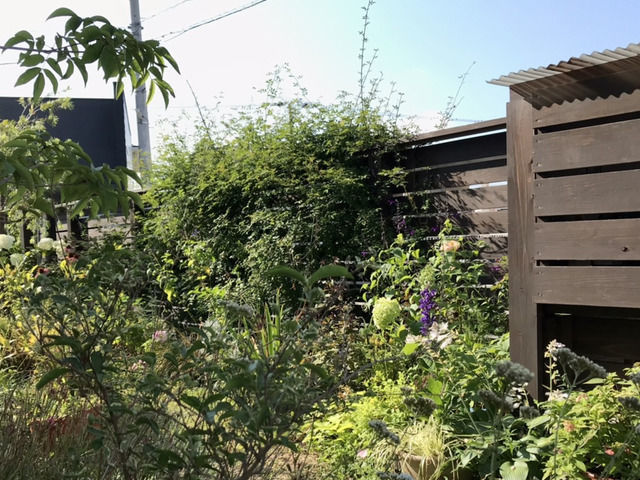 7月の庭、朝の様子