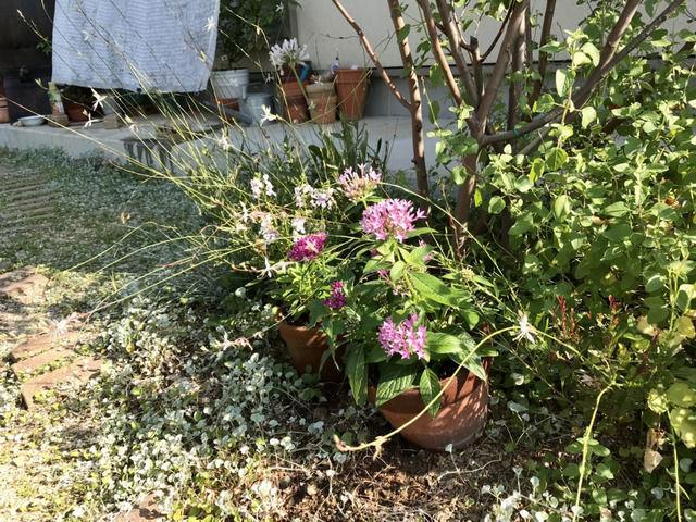 庭木の足元に置いている植木鉢