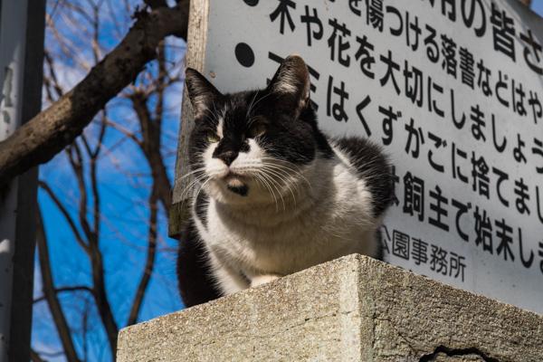 f:id:tonkotutarou:20170202200248j:plain