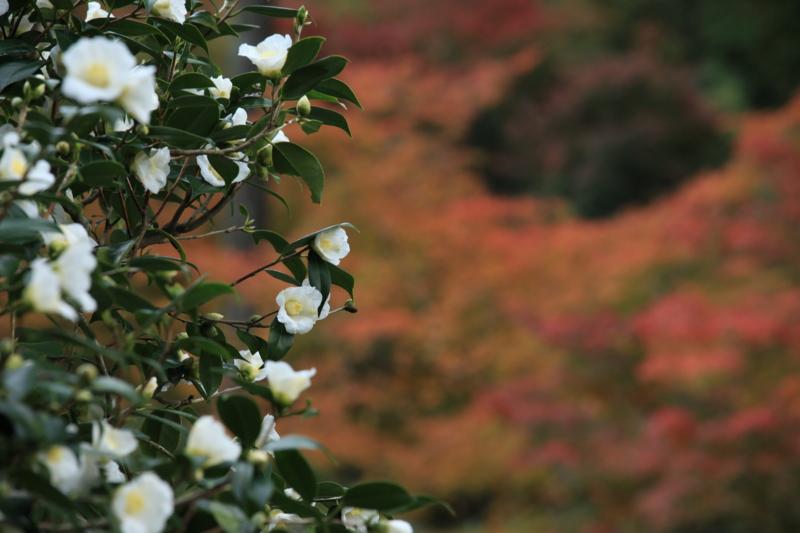 f:id:toonii:20111120121145j:image