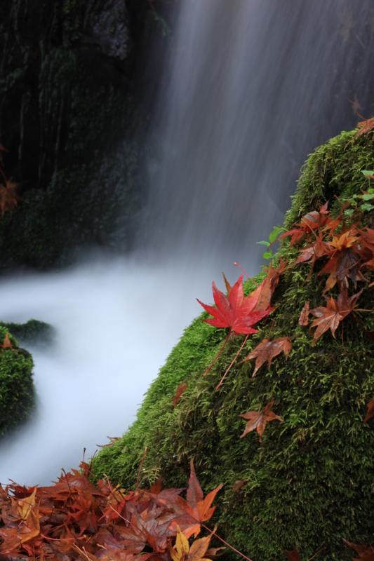 f:id:toonii:20111203123116j:image
