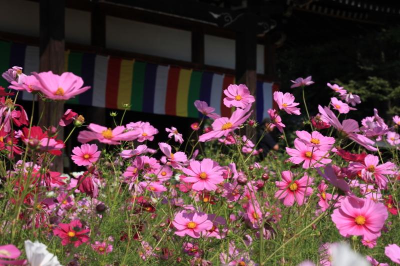 f:id:toonii:20121015124119j:image