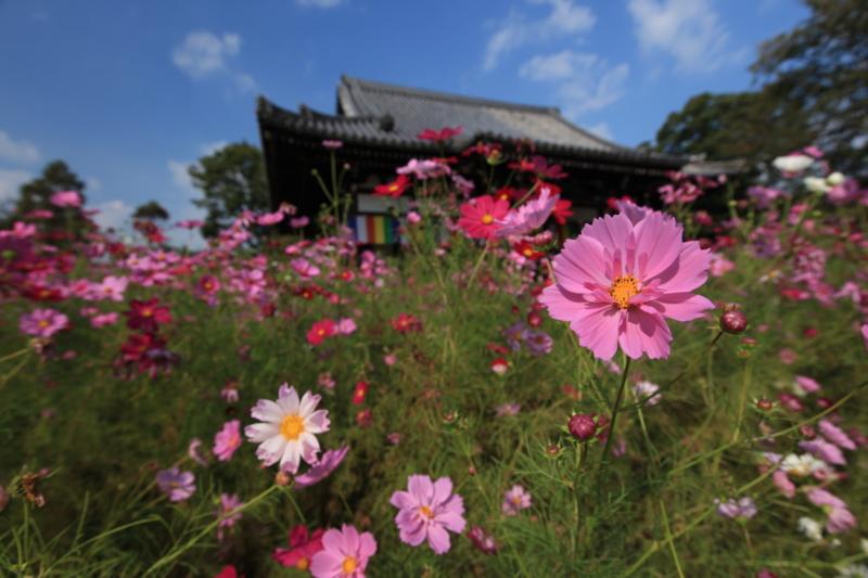 f:id:toonii:20121015134200j:image