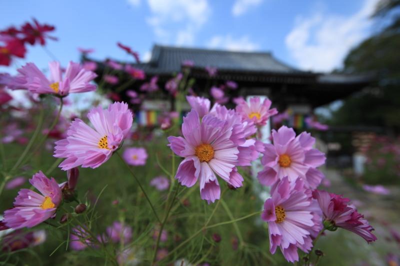 f:id:toonii:20121015134505j:image