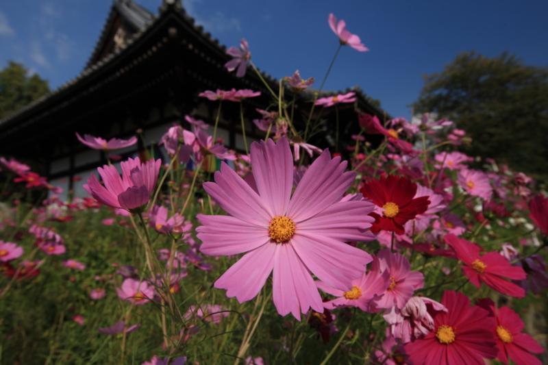 f:id:toonii:20121015135824j:image