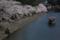 『京都新聞写真コンテスト 平日のひと時』