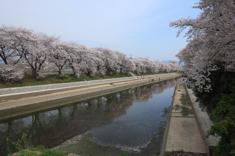 『京都新聞写真コンテスト 東一口(ひがしいもあらい)』