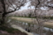 『京都新聞写真コンテスト 桜の下で』