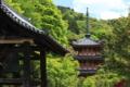 『京都新聞写真コンテスト 新緑に包まれて』