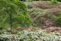 『京都新聞写真コンテスト 赤白新緑』