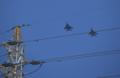 『京都新聞写真コンテスト 低空飛行』