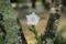 『京都新聞写真コンテスト 八重の桔梗』