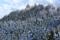 『京都新聞写真コンテスト 比叡山にUFO?』