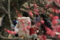 『京都新聞写真コンテスト 梅の木の下で』