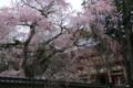 『京都新聞写真コンテスト 西大門を飾る』