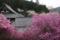 『京都新聞写真コンテスト 春の蓮華寺』