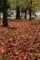 『京都新聞写真コンテスト 桜の葉散る』