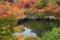 『京都新聞写真コンテスト 放生池』