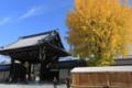 『京都新聞写真コンテスト 御影堂門の銀杏』