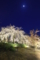 『京都新聞写真コンテスト 植物公園の夜桜』