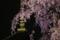 『京都新聞写真コンテスト 暗闇に浮かぶ』