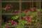 『京都新聞写真コンテスト ガラスに反射』