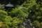 『京都新聞写真コンテスト 新緑の参道』