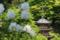 『京都新聞写真コンテスト 白いシャクナゲと三重塔』