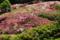 『京都新聞写真コンテスト ツツジの丘』