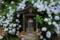 『京都新聞写真コンテスト 紫陽花の家』