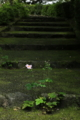 『京都西山 善峯寺』