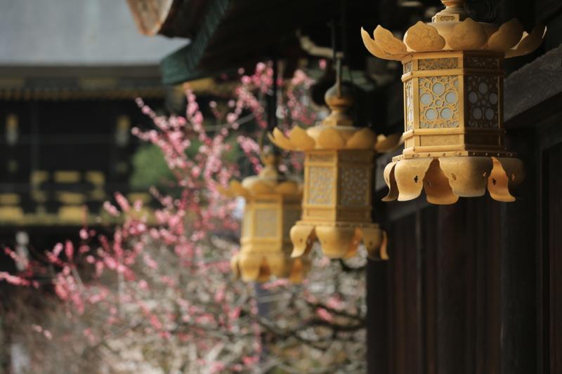 『京都 北野天満宮 梅』