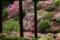 京都「三室戸寺」ツツジの咲くころ
