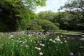 京都市「平安神宮」神苑 花菖蒲