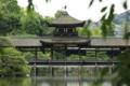 京都市「平安神宮」神苑 サギ観察?