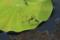 『宇治市植物公園 トンボ』 ハート