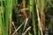 『宇治市植物公園 トンボ』