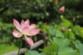『宇治市植物公園 100mmマクロ』