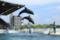 『京都水族館 イルカ』