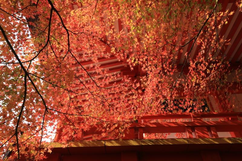世界文化遺産「醍醐寺」伽藍