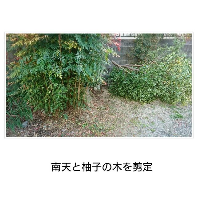 f:id:torahana-studio:20201016210232j:image