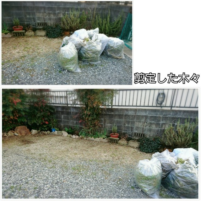 f:id:torahana-studio:20201016210248j:image