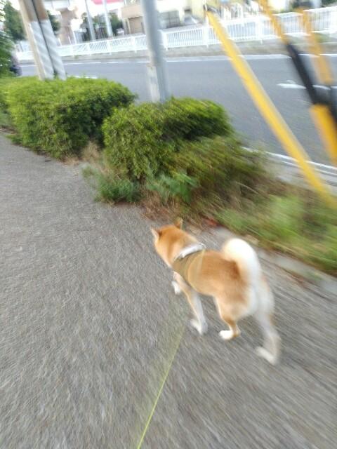 f:id:torajiro-0612:20180818072737j:image