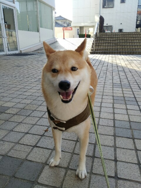 f:id:torajiro-0612:20180819164020j:image