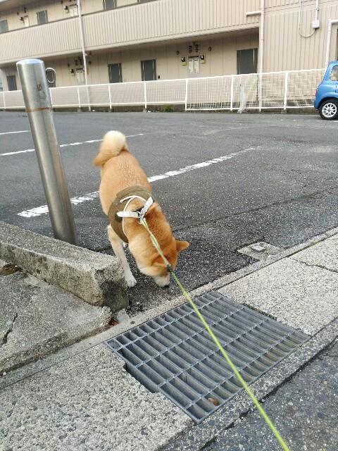 f:id:torajiro-0612:20180825072727j:image