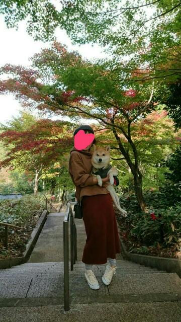 f:id:torajiro-0612:20181116200215j:image