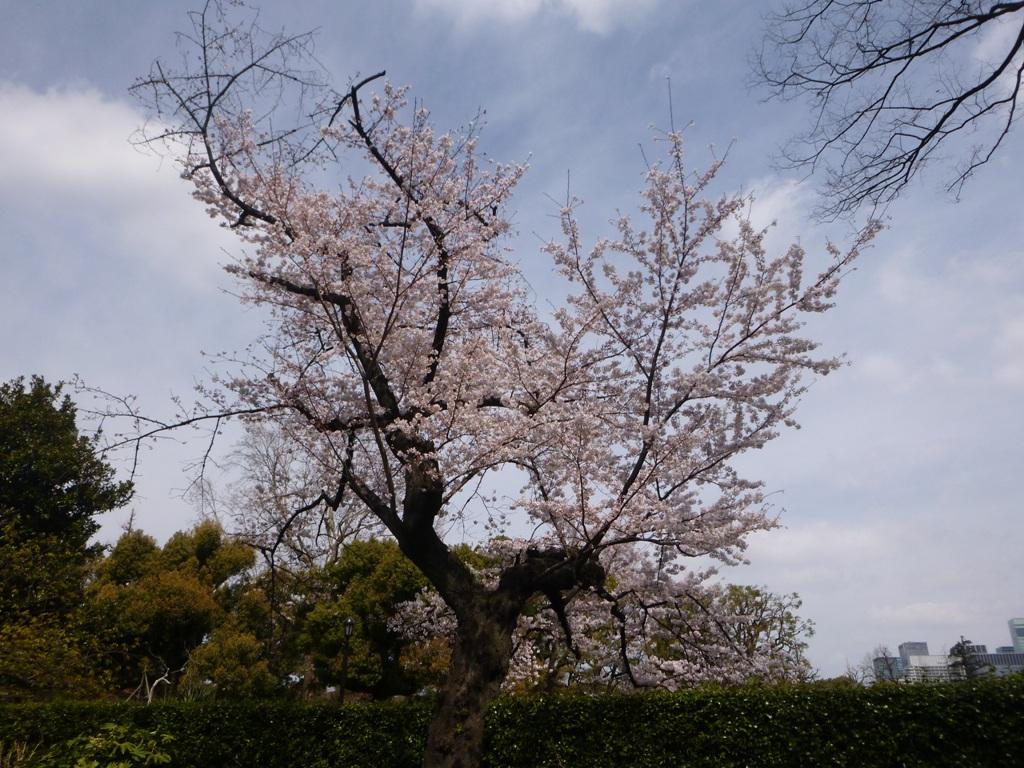 f:id:torakichi7:20170402104059j:plain