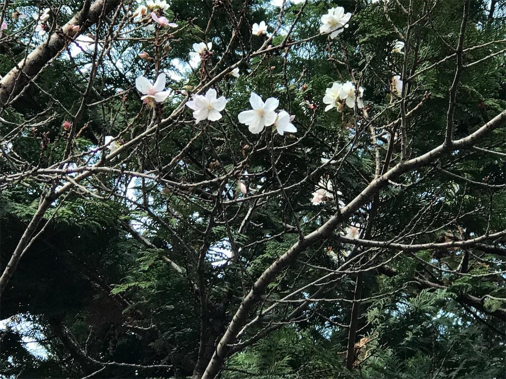 f:id:torakichi7:20180205090550j:image